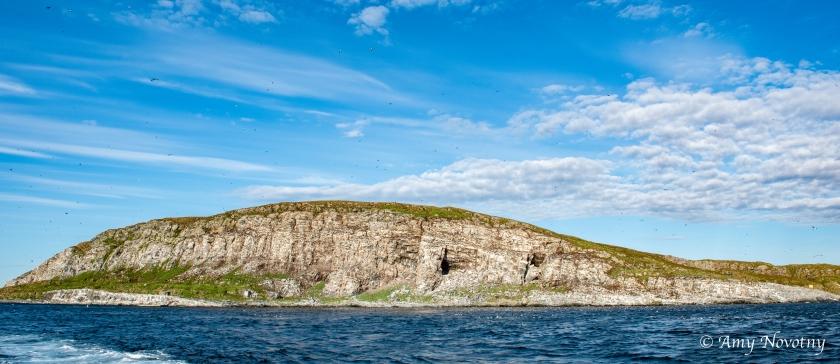 Hornoya island 8265