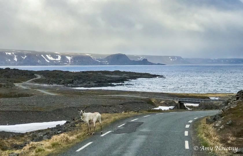 Scenic iphone Sandfjord 1250