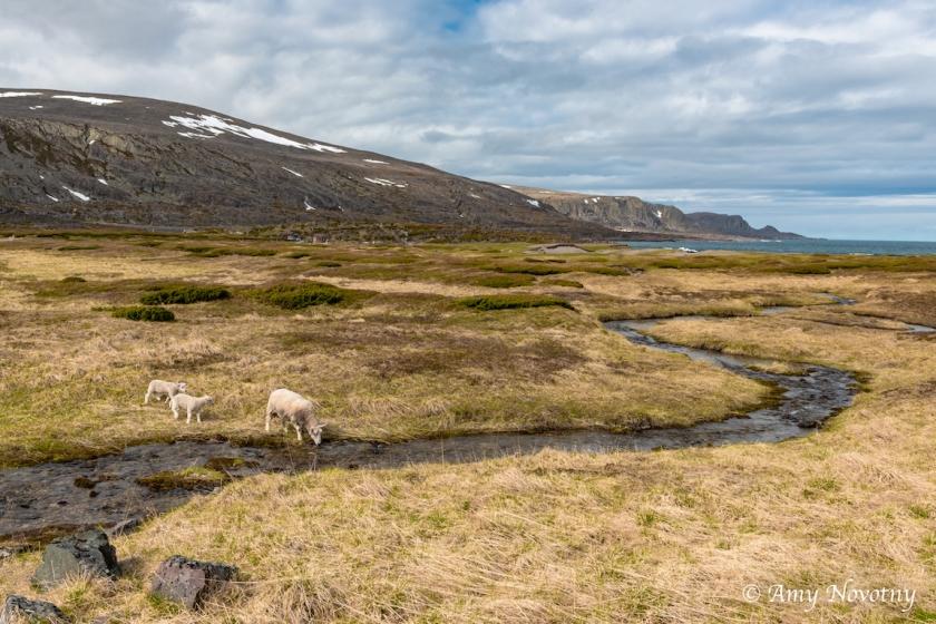 Scenic Sandfjord 7872