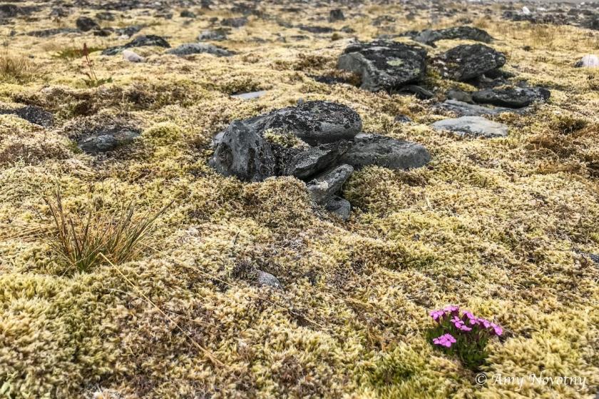 Veines peninsula tundra 2645