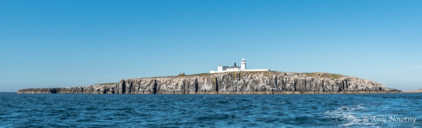 Inner Farne island July 4 0455