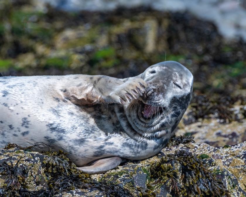 Seals July 4 2120