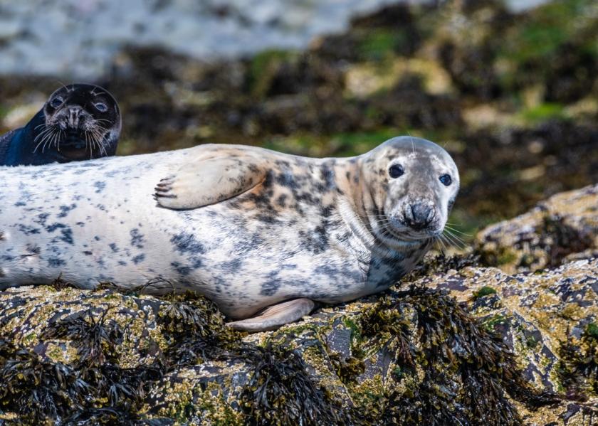 Seals July 4 2217