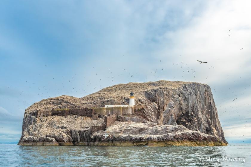 Gannets Dunbar July 10 1716