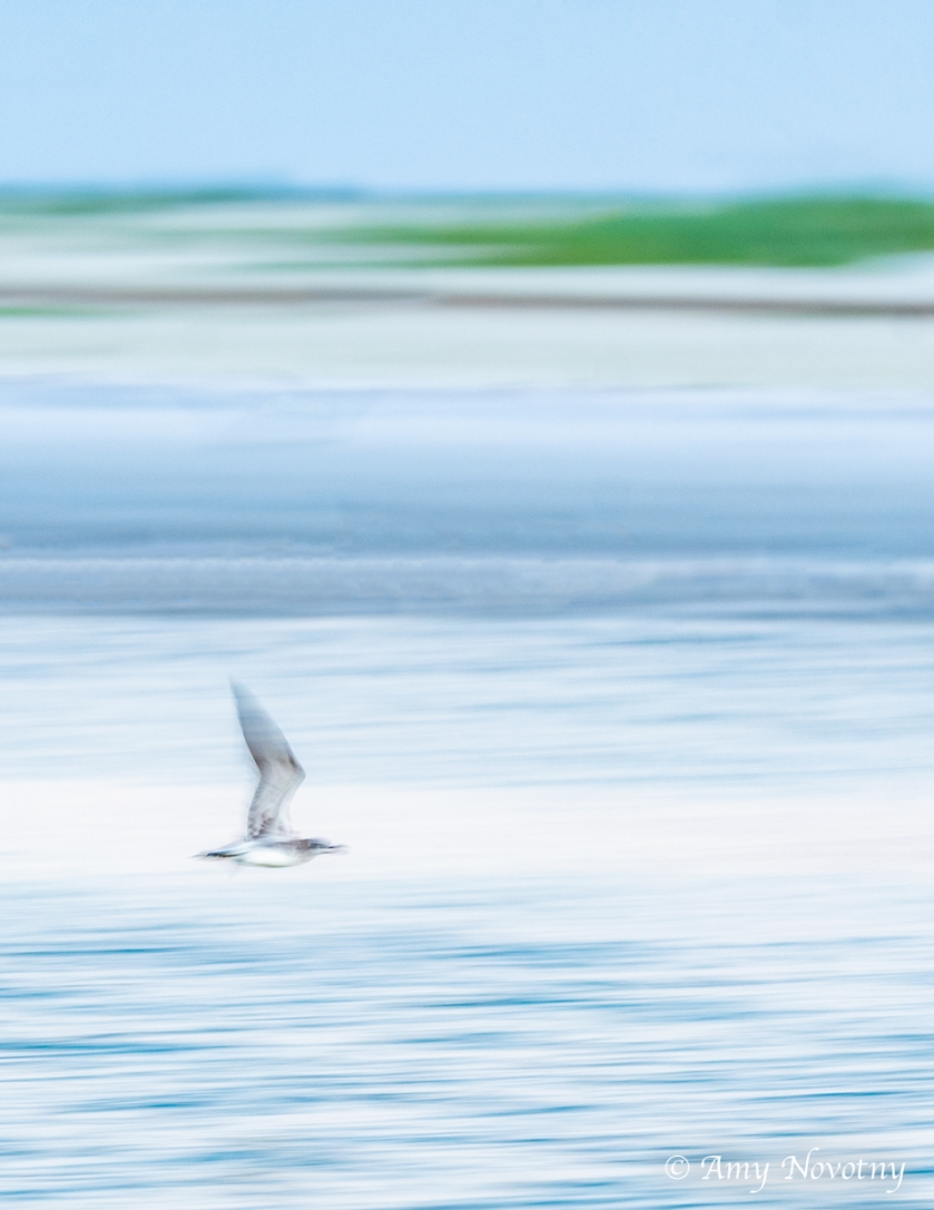 Fort DeSoto North Beach blur 5848 September 27, 2018